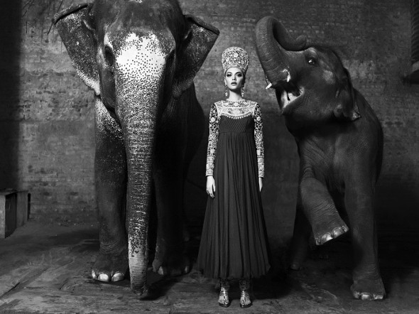 RS09KS22 - Queen of the Jungle in Abu Sandeep